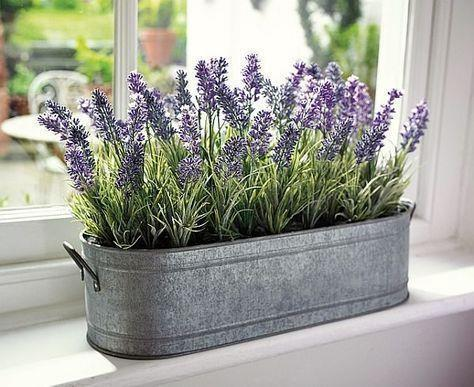 Lavender is a multi-tasker