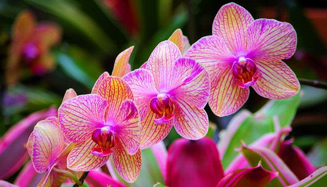 Orchid lovers enjoy a life of luxury
